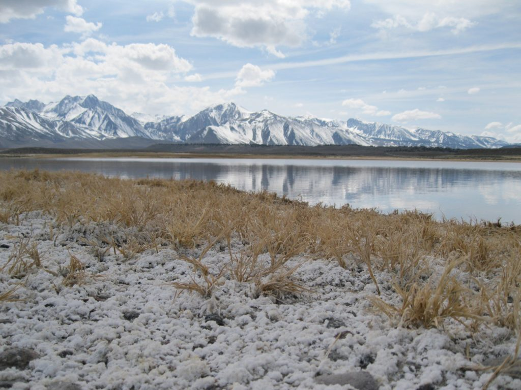High Salt Soils in California