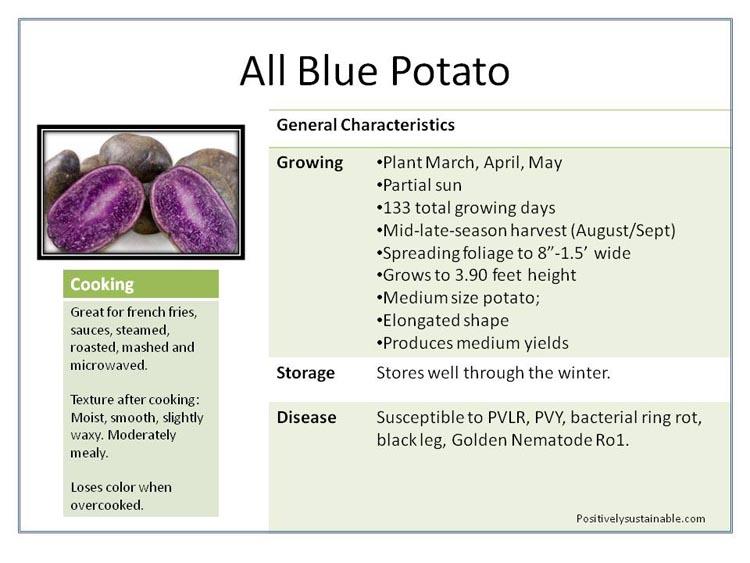 Purple Potatoes - how to grow