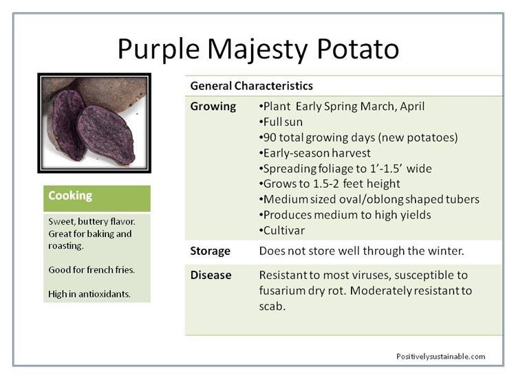 Purple Majepsty purple potatoes