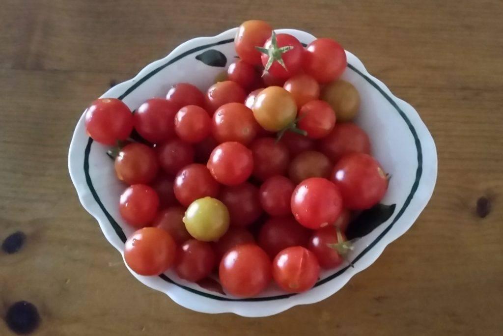 Cherry tomato variety