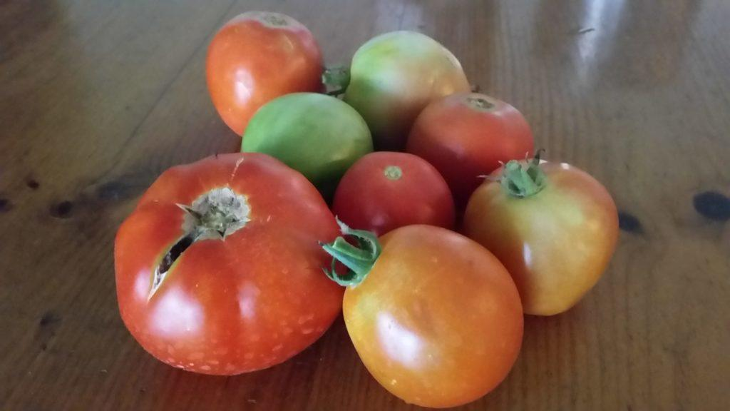 Tomato varieties to choose from