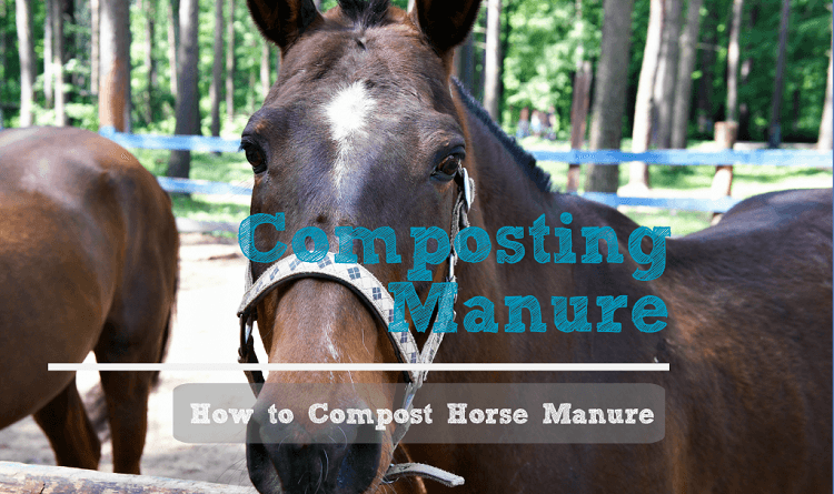 Horse manure makes great composting materials - how to compost horse manure