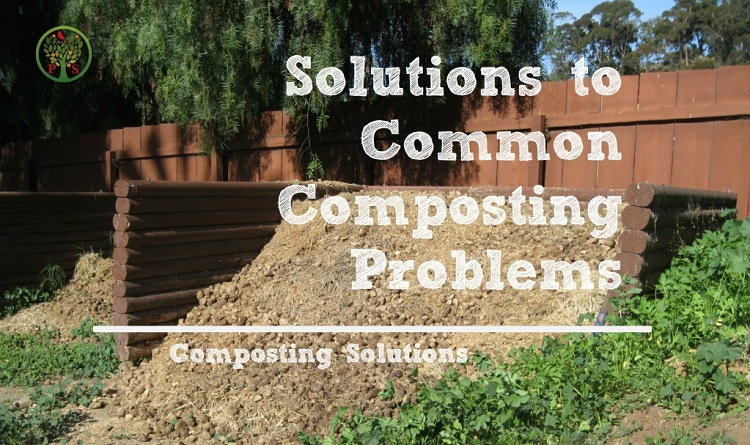 composting problems - solutions