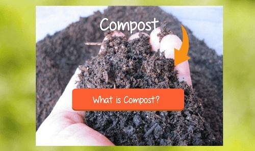 compost defined
