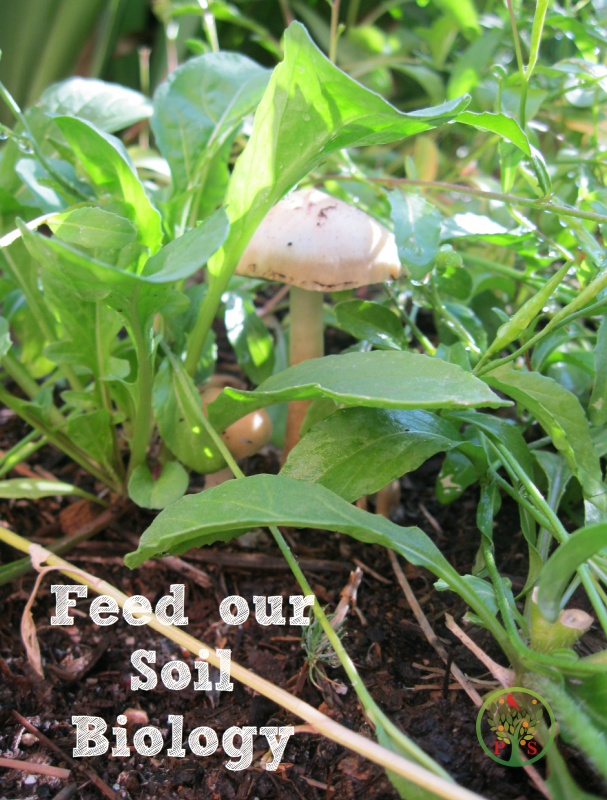 The best organic fertilizer feed our soil microbes